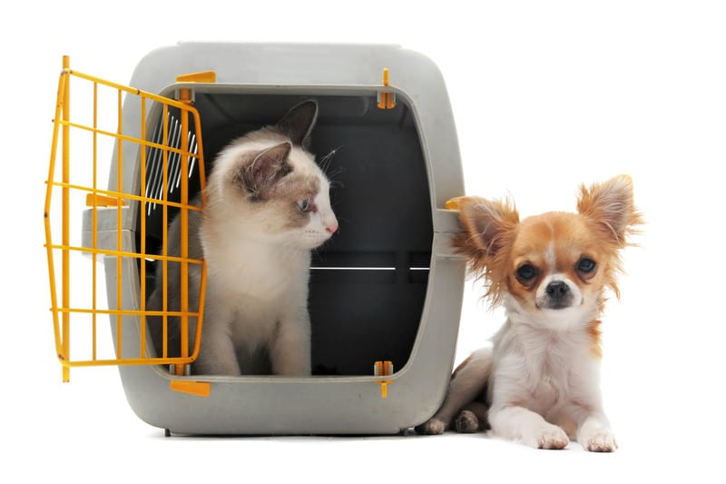 10 Tips To Make Moving With Pets Easier